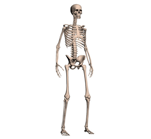 Skeleton - Gaia 3D Sol...