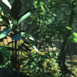 Rainforest_B